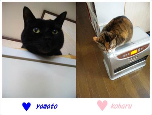 yamakoharu.jpg