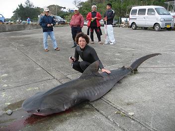 鮫とドンコ