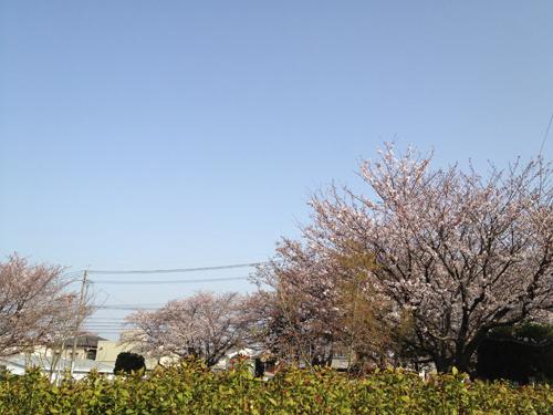 写真 2013-03-19 8 43 55