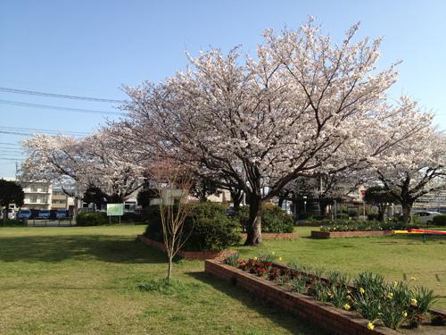 写真 2013-03-22 8 44 21