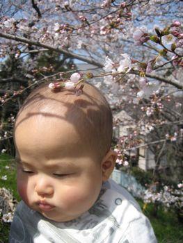 桜とリュウ