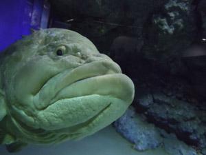 20111215魚