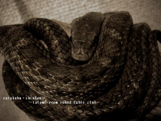 2012_0104_035028.jpg