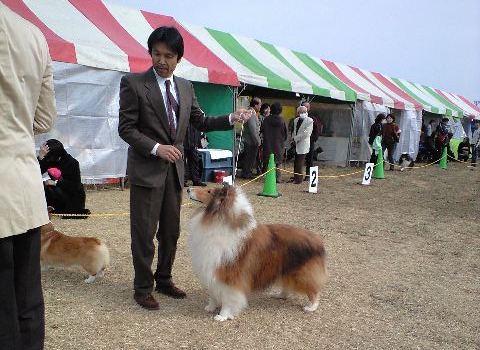 2010-02-14-ドッグショ- C (1)