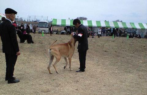 2010-02-14-ドッグショ- C (10)