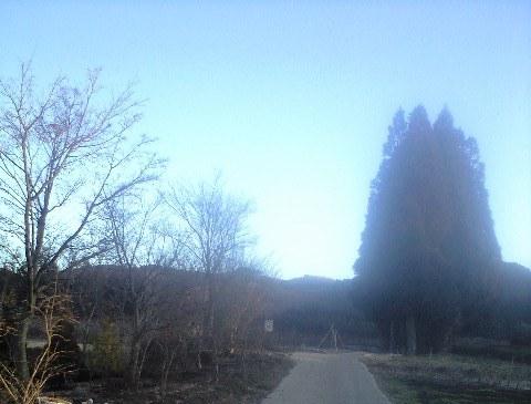 2010-02-20-ベリージュファーム0