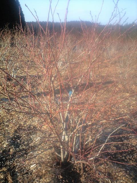 2010-02-20-ベリージュファーム9