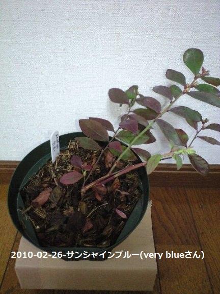 2010-02-26(8)-サンシャインブルー(very blueさん).