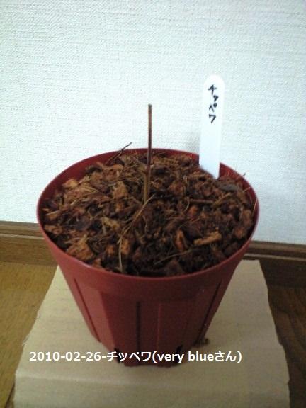 2010-02-26(6)-チッペワ(very blueさん)