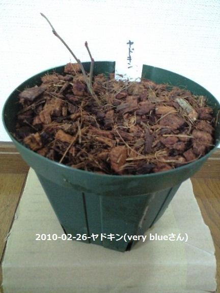 2010-02-26(7)-ヤドキン(very blueさん)