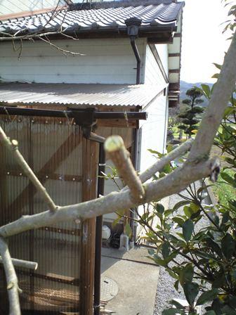 2010-3-22-柿剪定4
