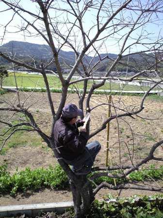2010-3-22-柿剪定2
