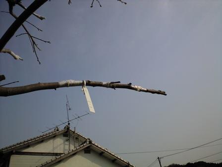 2010-3-22-柿剪定09