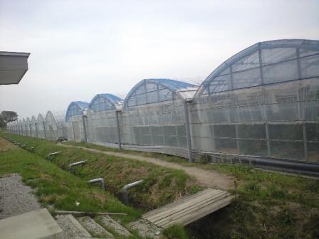 2010-5-5-トマ王7