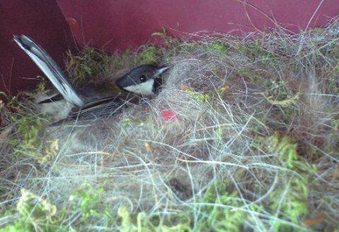 2010-6-6-小鳥