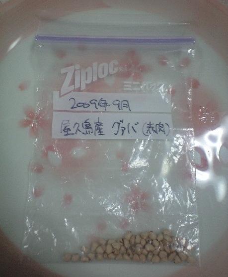 2010-6-8-グァバ(赤実)種1