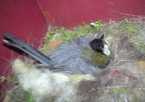 2010-06-12-小鳥2