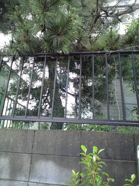 2010-06-19-シャシャンボ (2)