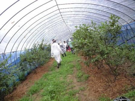 2010-07-03-佐藤ブルーベリー農園1