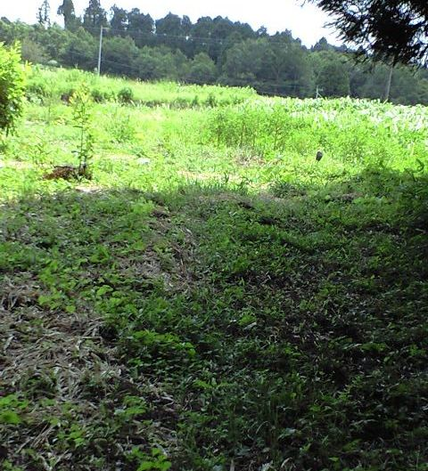 2010-07-31-畑2