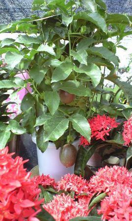 花と緑のガーデン (13