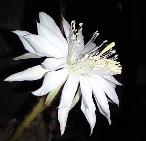 2010-09-22-サボテンの花