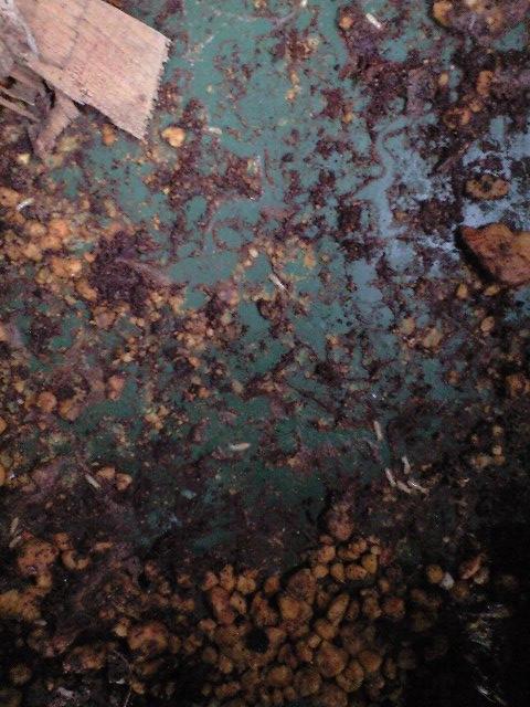 2010-10-23-白蟻