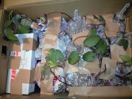 2010-10-29-ブルーマチスさんからの贈り物