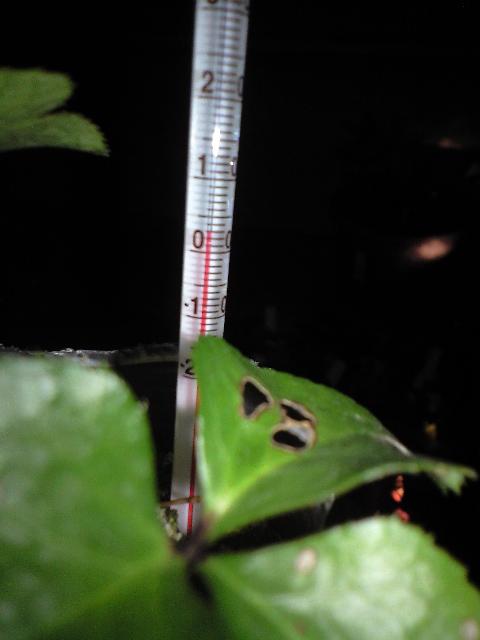 2011-1-18-温度 (5)