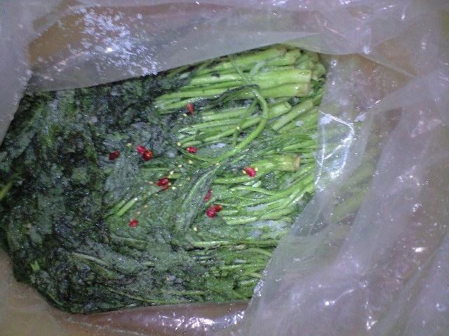 2010-3-20-高菜5
