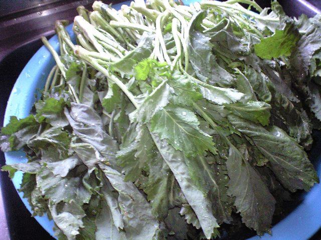 2010-3-20-高菜1