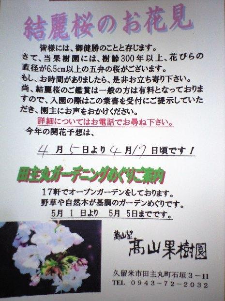 結麗桜のお花見2011-4-5