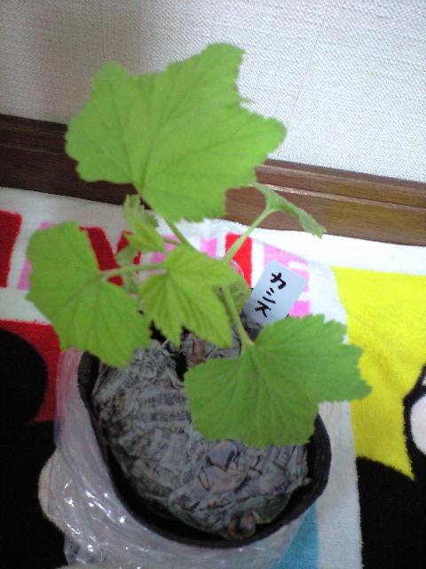 2011-5-16-りょっつぁんの贈り物 (6)