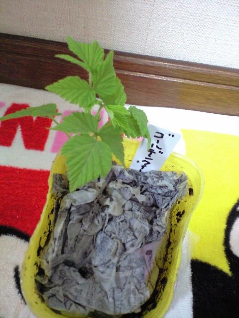 2011-5-16-りょっつぁんの贈り物 (8)