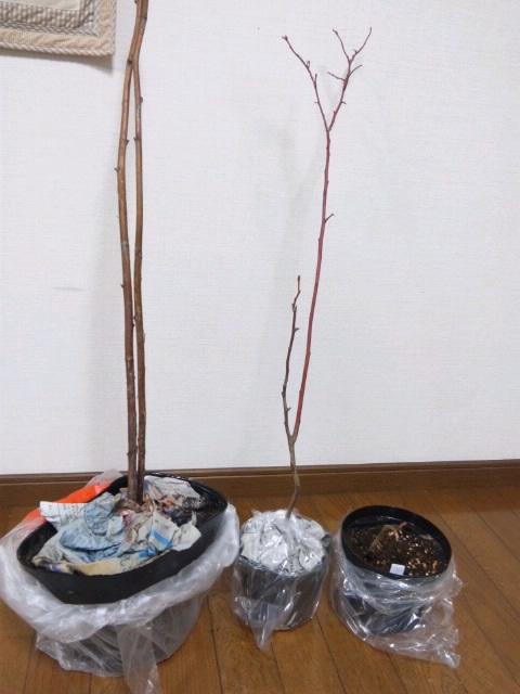 2011-1-6_苗