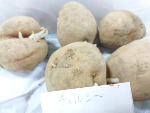 2012-1-22-kurobonさん (チェルシー)