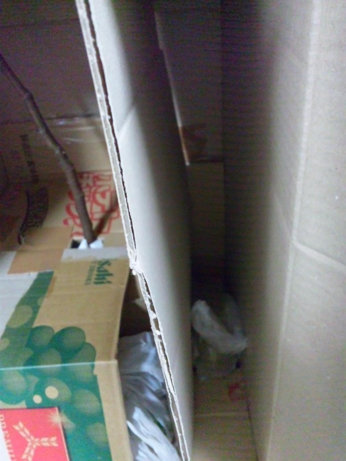2012-1-22-kurobonさん (箱2)