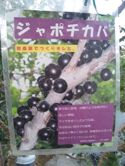 2012-2-12-田主丸  (15)