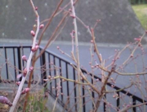 2010-02-13-ティフブルー