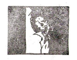 img331.jpg