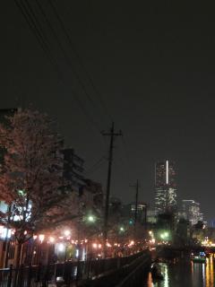 20120413yozakura01.jpg