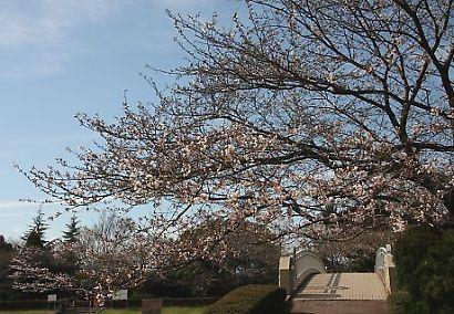 静岡県立大学芝生公園-2