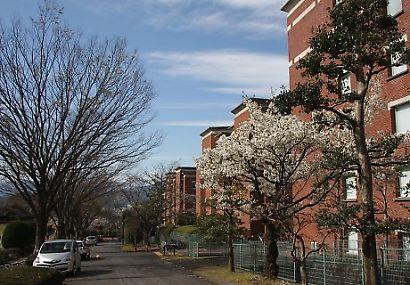 静岡県立大学芝生公園-4