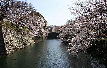 駿府公園桜30日-1