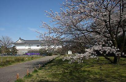駿府公園桜30日-4