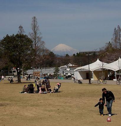 駿府公園桜30日-5