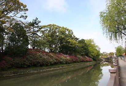 駿府公園ツツジ-2