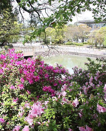 駿府公園ツツジ-6