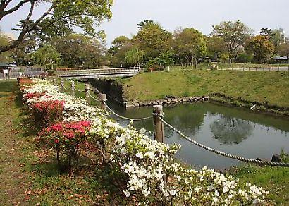 駿府公園ツツジ-7