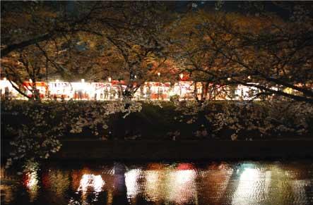 11夜桜.jpg